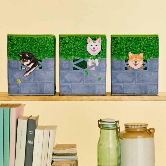 柴犬が「壁からひょっこり」してる収納ボックスがかわいい~♡ 並べて飾ったら幸せな気持ちになれそうです