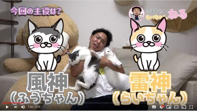 サンシャイン池崎がYouTubeに猫専用チャンネルを開設したぞーっ! 収益は動物保護活動団体に全額寄付されます