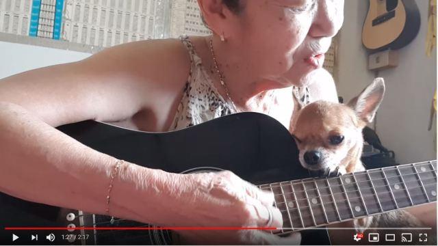 女性がギターを演奏し始めると、犬が寄り添い、猫がコーラス参加するという夢のような世界がありました