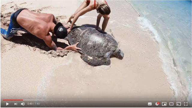 砂浜に何かが埋まってる…? 近寄ってみたら「ひっくり返ったまま動けなくなっていたウミガメ」でした