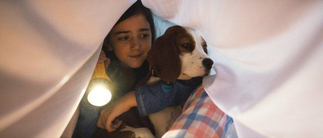 【本音レビュー】何度も生まれ変わって愛犬と再会する…映画『僕のワンダフル・ジャーニー』のワンコの飼い主への愛の深さに涙が止まらない!