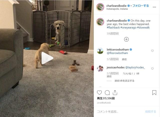 【警戒心マックス】忍び足ででっかいワンコに近づく子犬にキュン♡ 一瞬でうちとけた2匹の心温まる交流をご覧ください