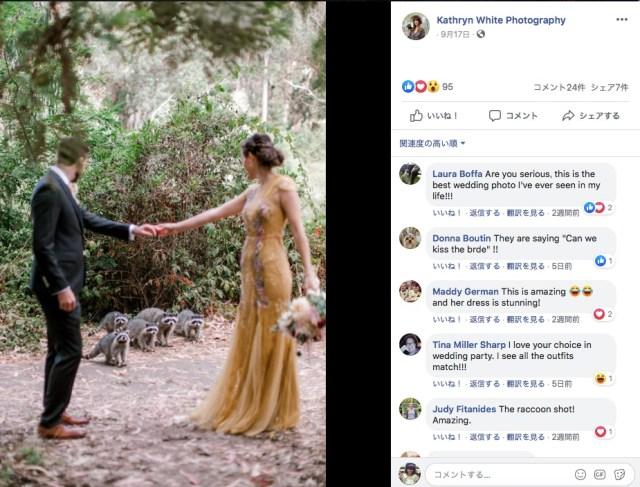 結婚式に飛び入り参加したのは…アライグマの家族!! 一生の思い出になるウェディングフォトが撮れました