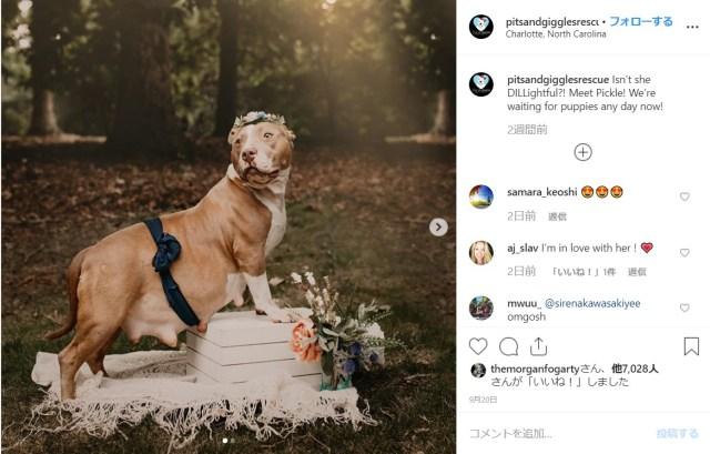 保護した犬が妊娠していたから…保護した人はカメラマンだったから…運命的に生まれたマタニティフォトが話題に