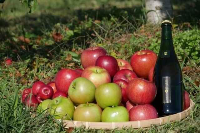 長野県の果樹園が「台風で傷ついたリンゴ」でシードルを作る! クラウドファンディングで支援できます