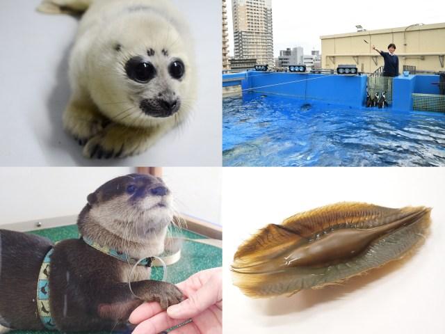 【2020年福袋】サンシャイン水族館の福袋特典がマニアックでスゴい!! 「白い毛」「タマゴの殻」が当たるって…どういうことなの〜‼︎