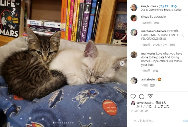 保護猫ちゃんとゆっくり過ごせるブックカフェがあった / 運命の出会いがあれば家族にすることもできます