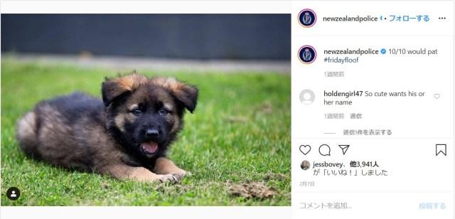 ニュージーランド警察のインスタが「動物好きアカウント」と化してるっ!? 警察犬のおちゃめな様子も見れちゃうよ
