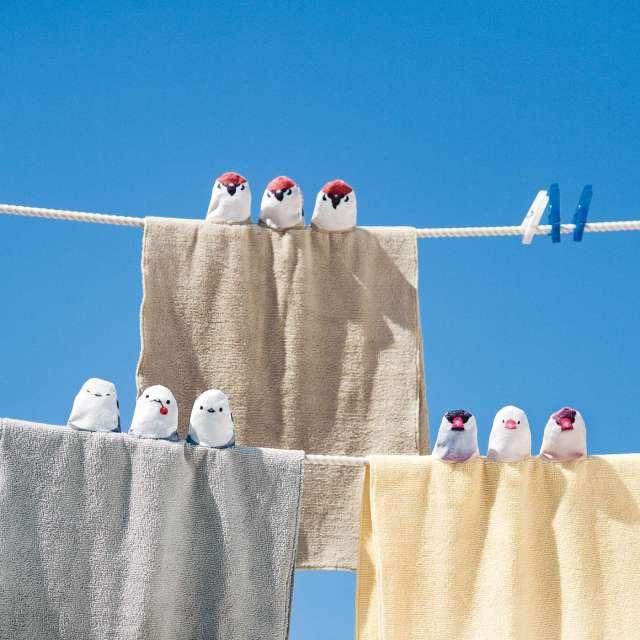 鳥さんがタオルに「ちょこん!」と止まってる!? 洗濯するたびに癒やされる小鳥タオルが罪深い可愛さ…