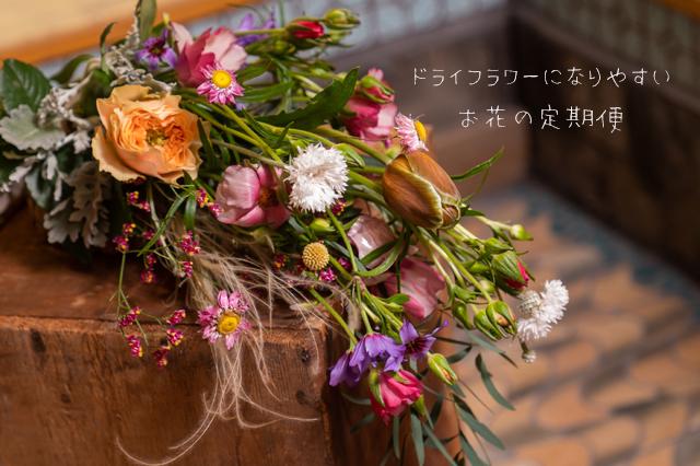 ドライフラワーになりやすいお花をセレクトして送ってくれる「お花のサブスク」が登場! 長時間お花を楽しめちゃうよ
