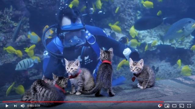 【癒やし動画】休館中の水族館を保護された子猫たちがお散歩! カラフルなお魚をじーっと見つめる瞳がかわいすぎます♡