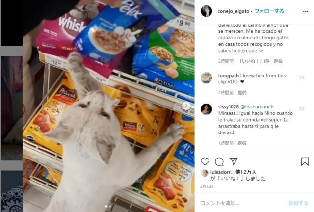 【運命の出会い】スーパーの前にいた野良猫が「こっちにきて」と鳴いている!? 連れて行かれた先はキャットフードコーナーでした