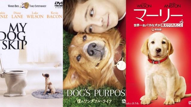 【犬好き集合】これは見て欲しい! 心が浄化されるオススメの犬映画3選