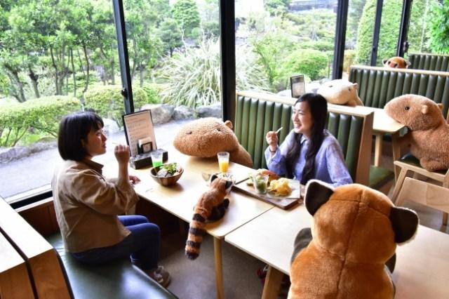 伊豆シャボテン動物公園の「ソーシャルディスタンス」がすてき♪ カピバラと「相席」することで距離を保てます