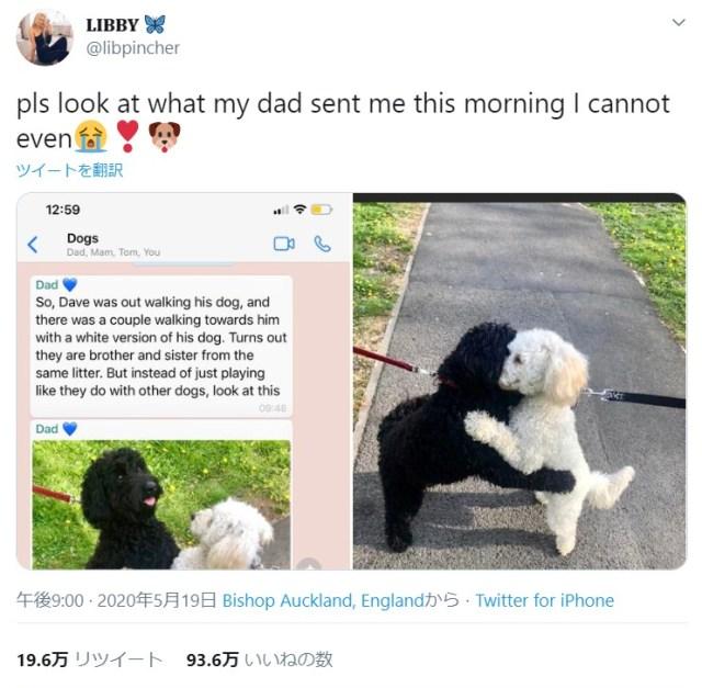 【奇跡の出会い】飼い犬と散歩していたら…向かいから来た他の犬とハグ!? なんと兄妹でした