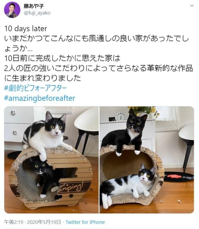 藤あや子家の猫ハウスが「匠の技」で風通しの良すぎる家に!? 猫たちが10日かけてリフォームしたようです