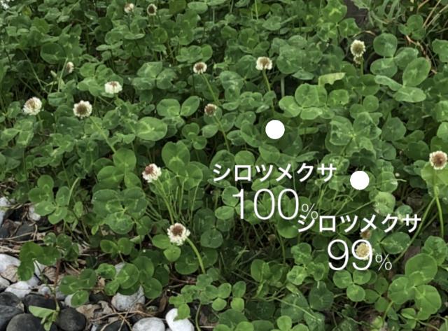 かざすだけで花の名前が分かる「ハナノナ」アプリを入れて散歩してみた! いつものお散歩がぐっと素敵になるよ♪