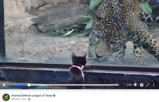 保護犬と保護猫が動物園にやってきた! 「なんなんだこれは…」と興味津々に見つめ合う様子がかわいすぎるのです