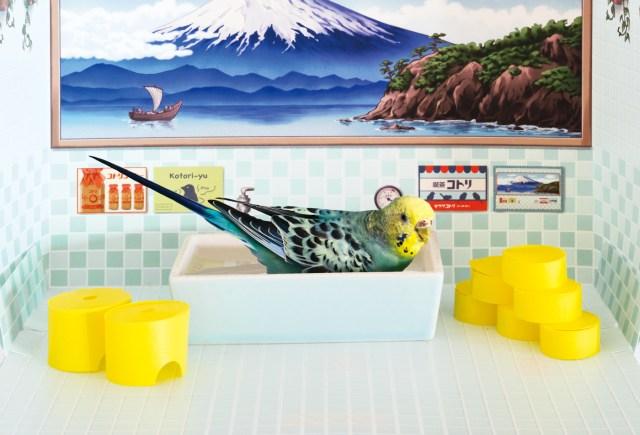 小鳥さんがくつろげる「バード銭湯」がめっかわ♡ 磁器の浴槽や黄色いおけなどミニチュアも精巧です