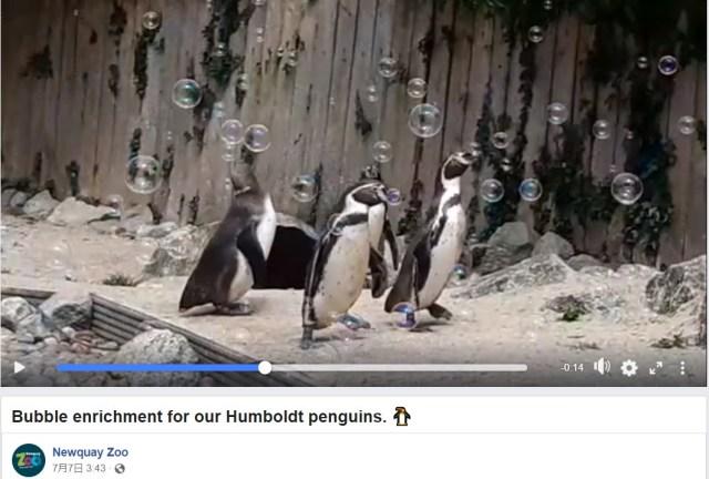 「何これ、キレイ!!」シャボン玉に夢中のペンギンがかわいい~♡ 休園が続いた動物園にサプライズプレゼントが届いたよ