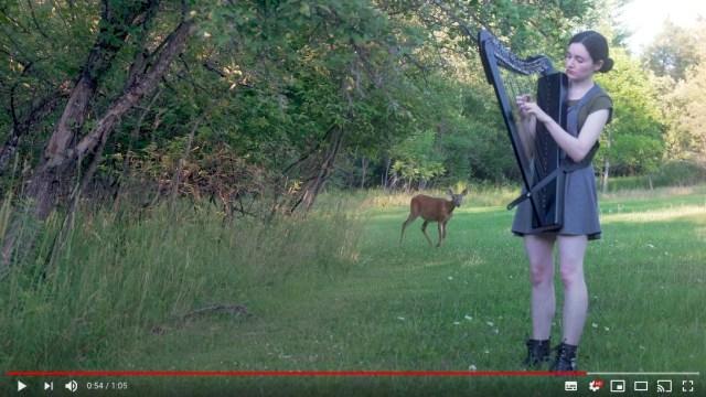 まるでバンビの世界のよう… 森でハープを演奏していたら鹿がひょっこりあらわれた!