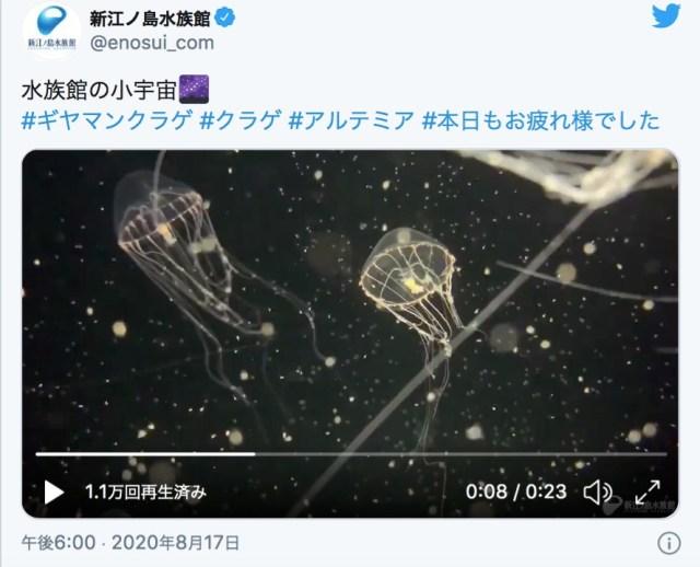 まるで宇宙のように幻想的な「クラゲの水槽動画」を新江ノ島水族館が公開…涼しげで永遠に見ていたくなります