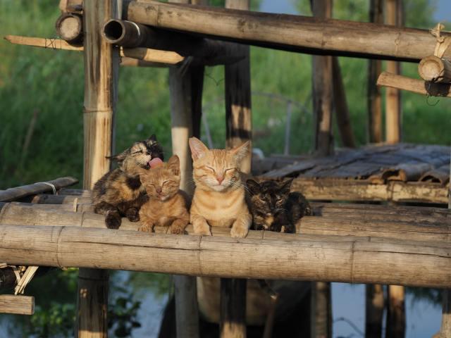 中村倫也ナレーションで『岩合光昭の世界ネコ歩き』劇場版が2021年に公開決定! 最高の癒やしになる予感です