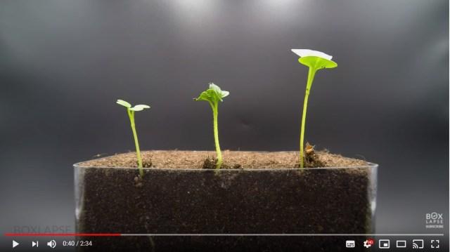 ジャズに合わせて植物たちが芽吹く…! まるで踊っているみたいな「タイムラプス動画」がかわいいのです