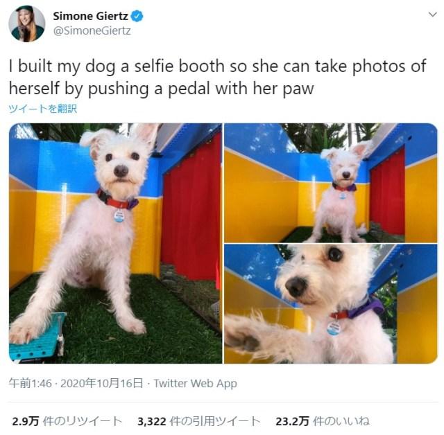 犬が自分でシャッターを押して自撮りできる! 愛犬のために作った「犬用セルフィーブース」がネットで大人気