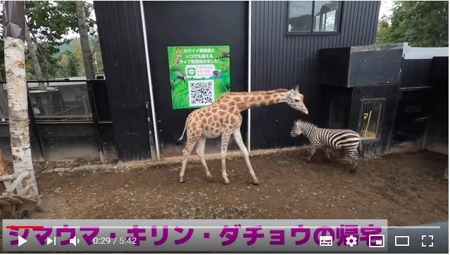 動物たちが「おつかれさまでした~」とばかりに動物園から帰宅する動画が面白い! それぞれの個性が垣間見えます