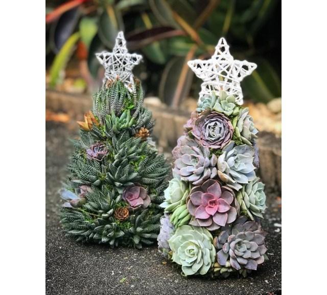 多肉植物で作ったクリスマスツリーがシックでナチュラルなかわいさ! いつもとはひと味違う雰囲気を楽しめそう