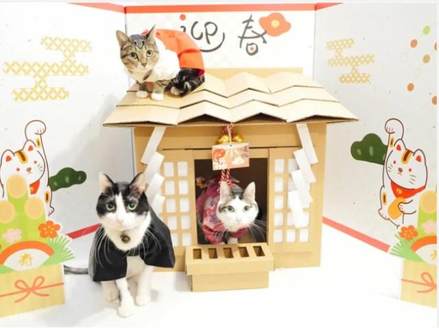 我が家のニャンコが「猫神様」に!? トイレカバーにもなる猫用ダンボールハウス「ネコ神社ハウス」がかわいいよ~♪