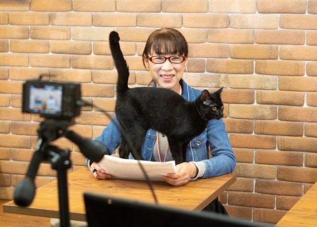オンラインで猫ちゃんと運命の出会いがあるかも…! 保護猫のオンライン譲渡会をかわいい「ネコのバス」から生中継