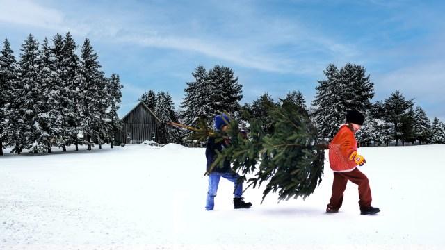 今年もイケアで「本物のモミの木」が販売されるよ〜! クリスマス後に返却すると買物クーポン券のプレゼントも