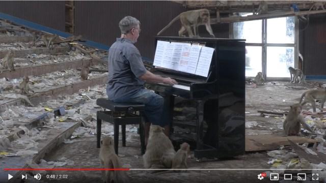 映画館の廃墟でサルに囲まれながらピアノ演奏する男性…なかなかシュールな光景だけどふしぎと癒やされます