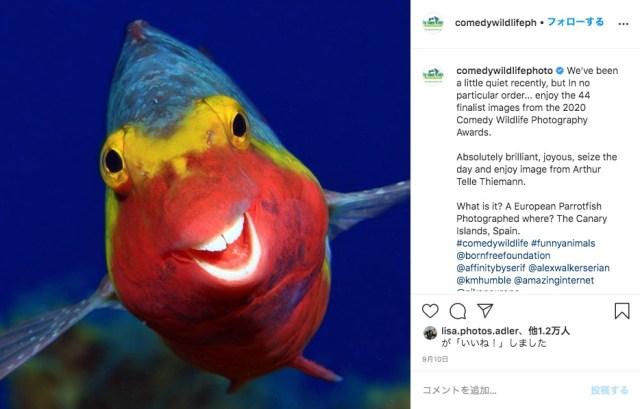 ドヤ顔の熱帯魚、おならで倒れるクマ… おもしろシーンをとらえたアニマル写真コンテストが傑作ぞろい!