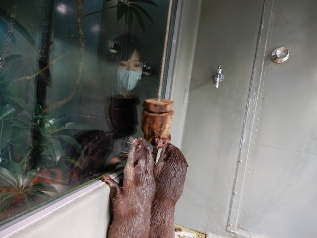 【2021年福袋】サンシャイン水族館の福袋はアタリが出たら「動物のお世話」ができる!?  「ペンギンの足型」などレアアイテムもあるよ