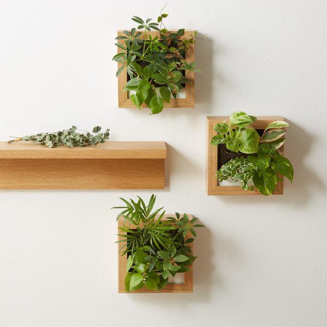 無印良品に「壁にかけられる観葉植物」がある! お手入れも簡単で気軽にグリーンのある暮らしができるよ