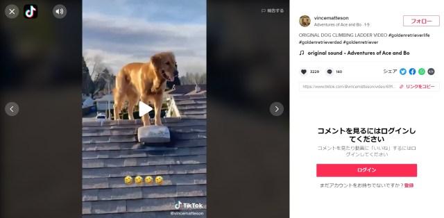 【えっ】愛犬のゴールデン・レトリバーが屋根の上にのぼってる!?  防犯カメラがとらえた一部始終にびっくり