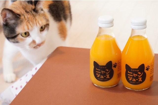 ジュースを飲むと猫ちゃんとフードロスを救える! 和歌山みかんの「ニャンジュース」が可愛くって美味しそう♪