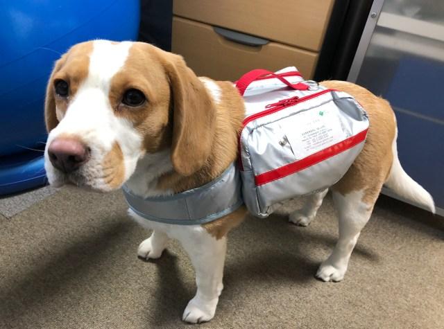 ペットの防災に…愛犬が自分で持ち運べる「避難ライフバッグ」が優秀! 手当てに使える医療用品入りで緊急事態に備えます