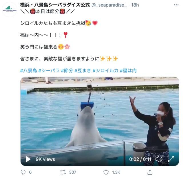 笑う門には福来る! 笑い声みたいなシロイルカの鳴き声を横浜・八景島シーパラダイスが公開してます