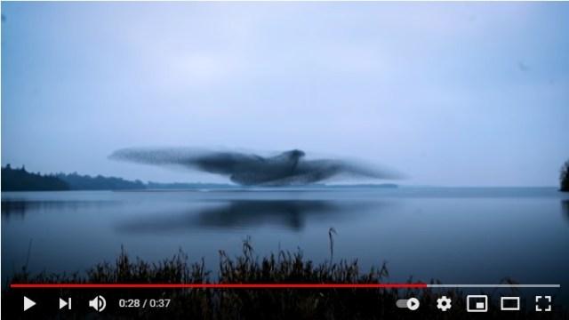 湖の上で羽を広げる巨大な鳥の正体は…!? 奇跡の瞬間が新聞の一面を飾るほど話題に