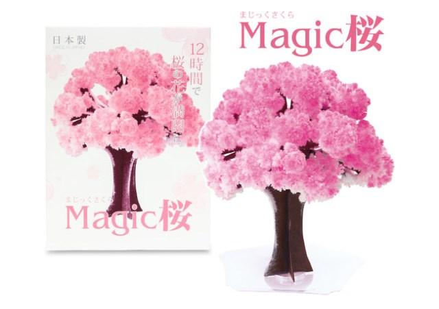 紙製なのに桜の花が咲く!  おうちでお花見が楽しめる「Magic桜」が不思議で面白い