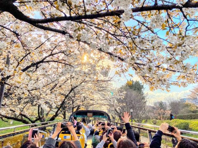 オープンエアの「2階建てバス」で開放感満点のお花見はいかが? 都内の桜の名所を約60分でめぐるバスツアーが始まったよ