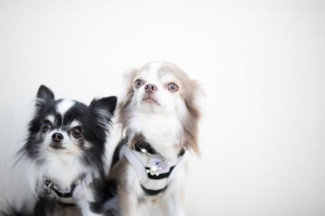 ペットにかけるお金は1年間で平均「犬が約34万円&猫が約16万円」/  動物を飼う前に知っておきたいお金のこと