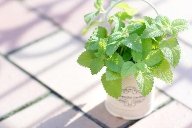 5月は家庭菜園を始めるベストシーズン! 初心者でも楽しめる家庭菜園キットでワクワクしよう