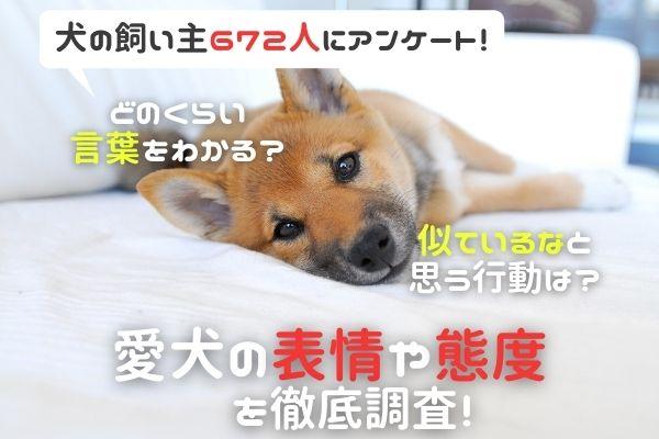 「犬が聞くと不機嫌になる言葉がある」と答えた飼い主は約5割! 嫌いな言葉1位は「お風呂」でした