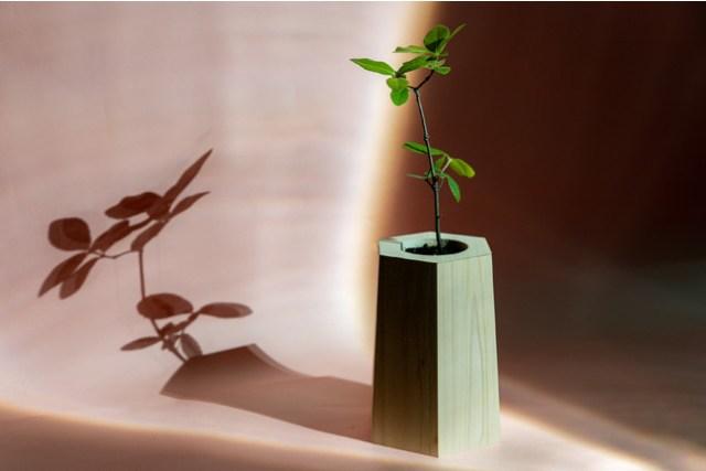 観葉植物として育てたあと山に返す…新しいカタチの観葉植物「MODRINAE」が素敵! 土砂災害防止の手助けにもなります