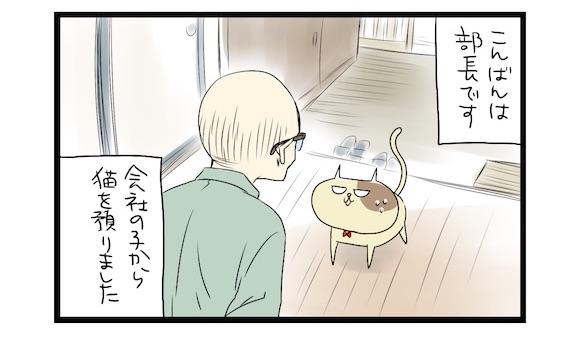 【夜の4コマ部屋 プレイバック】ししょーセレクション(1)  / サチコと神ねこ様 / wako先生